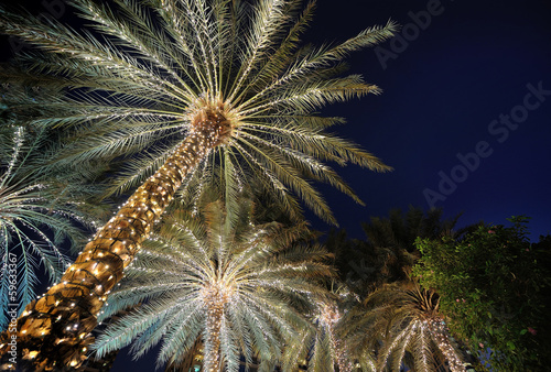 Deurstickers Palm boom palm trees decorated with Christmas garland night