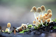 small mushrooms toadstools - 59633993