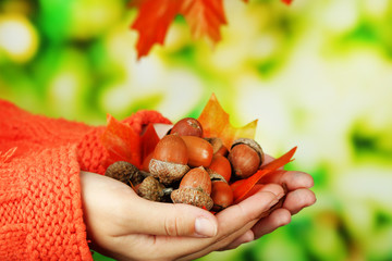 Man hands with acorns, on bright background