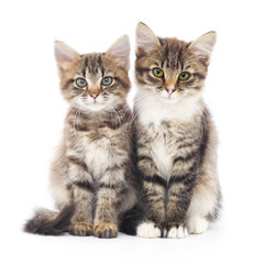 Two small kittens