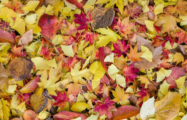 Bed of Autumnal leaves