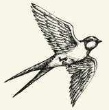 "Vector drawing of a series of sketches ""Birds"". Swallow"