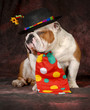 bulldog clown