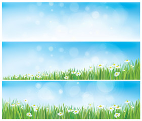 Vector nature backgrounds with sky, grass and chamomiles.