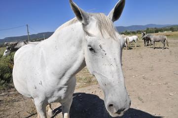 Particolare di un cavallo