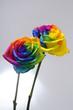 obraz - Bouquet of Rainbow...