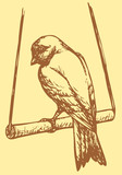 "Vector drawing of a series of sketches ""Birds"".  Domestic Canary"