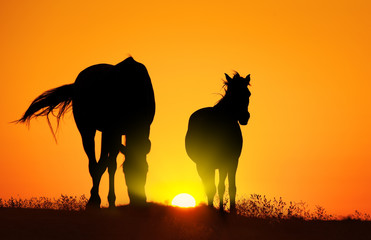 Horse silhouettes at orange sunset