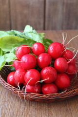 bunch of a red garden radish with green leaves