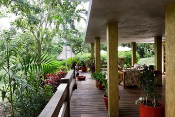 Jungle living in Belize