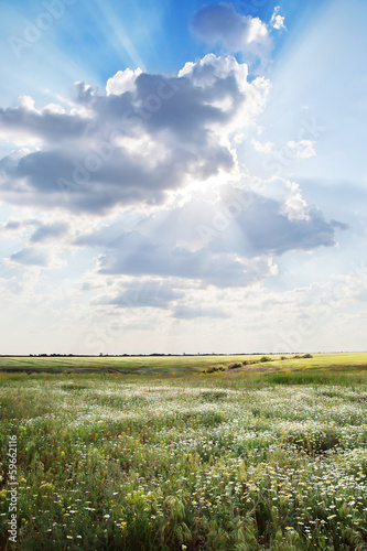 Field with flowers under the sun