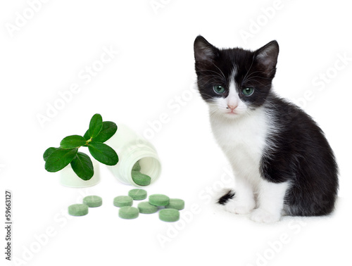 kitten and tablets
