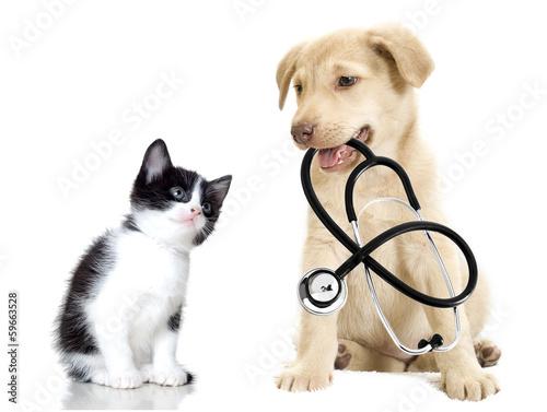 szczeniak i kotek