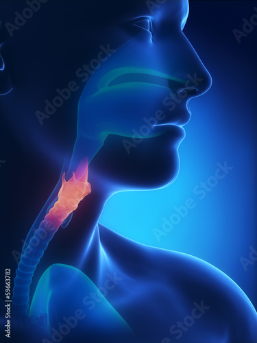 Larynx x-ray anatomy blue