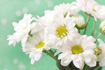 cute chamomile's flowers in gentle pastel tones