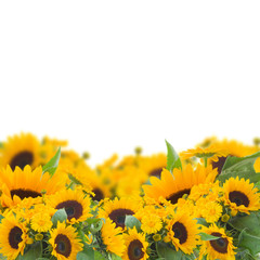 sunflowers and calendula flowers border