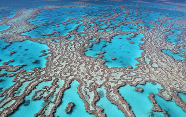 Tropical finger reef with crystal clear water