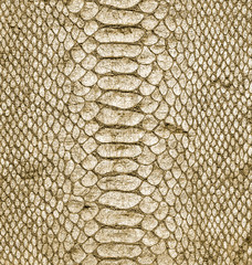 natural snake skin closeup