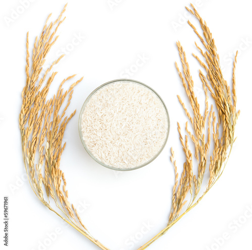 rice and paddy on a white background