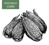 Corn-set of vector illustration