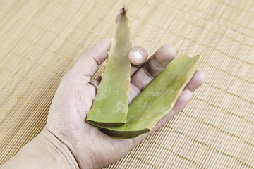 Damaged hands with aloe vera