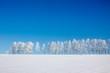 雪原の白樺並木 - 59681324