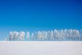 雪原の白樺並木