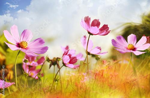 Naklejka Field of flowers