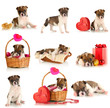 Collage of cute puppy isolated on white