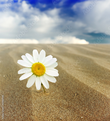 Flower in the desert