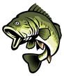 largemouth bass - 59689969