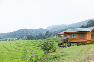 Home adjacent rice fields