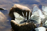 beautiful butterfly on the rocks near the water, nature, spring