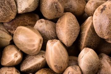 Close up photo of hemp seeds