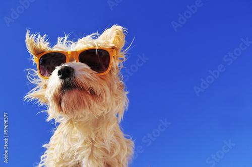 canvas print picture Hund mit sonnenbrille