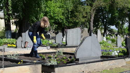 wife plant begonia flowers on husband grave in graveyard