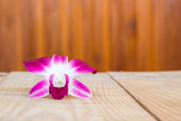 Beauty purple orchid flower