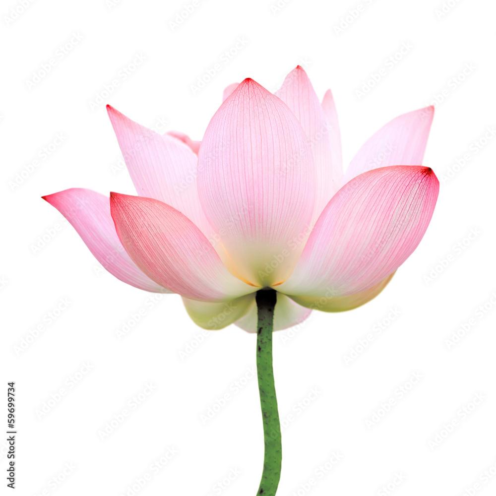 foto auf acrylglas isolated lotus nikkel. Black Bedroom Furniture Sets. Home Design Ideas