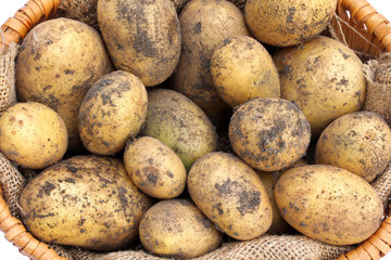 A basket of freshly harvested Organic Potatoes