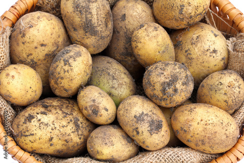 A basket of freshly harvested Organic Potatoes