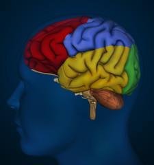 Brain detail