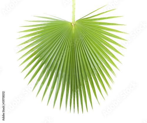 Deurstickers Palm boom Palm leaf.