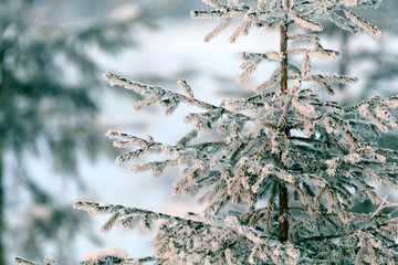 cold winter forest landscape snow
