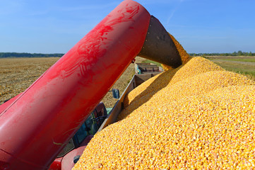 Overloading of maize