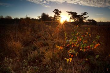 sunbeams over marsh at sunrise