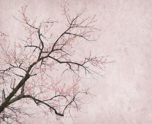 plum blossom on old antique vintage paper background - 59717372