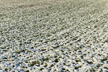 Field under snow.