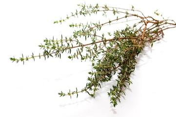 Une branche de thym