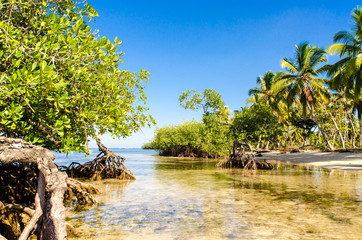Karibik pur: Sandstrand, Mangroven, Palmen, blauer Himmel