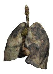 Lungs of Female Smokers